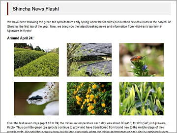 Updates on our tea farms