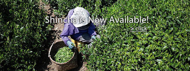 Shincha is Now Available!