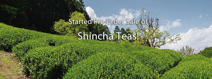 Shincha is Now Pre-orders Taken!