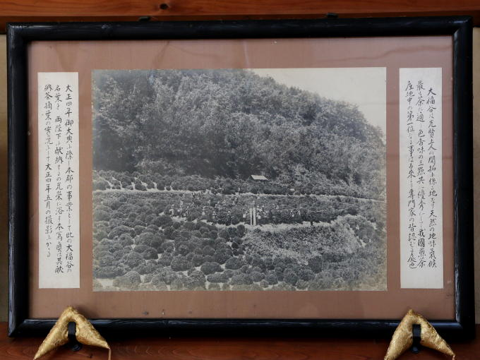 The harvest for the tribute tea to the TAISHO emperor. This picture was taken in May 1915.<br>